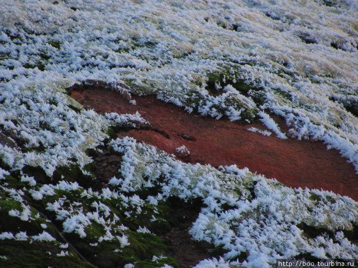 мхи и красный гейзерит