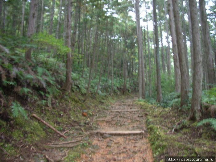 Тропа для паломников в Коя-сан