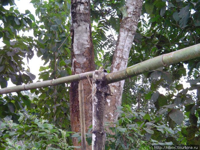 Водопровод мз бамбуковых труб