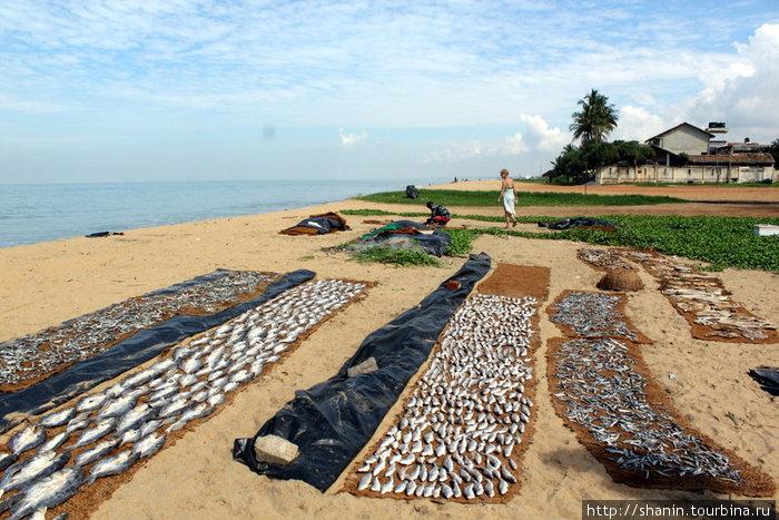 Рыба сушится прямо на пляже