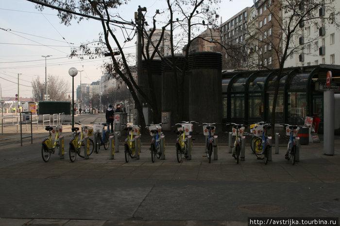 Вена — велосипедный город