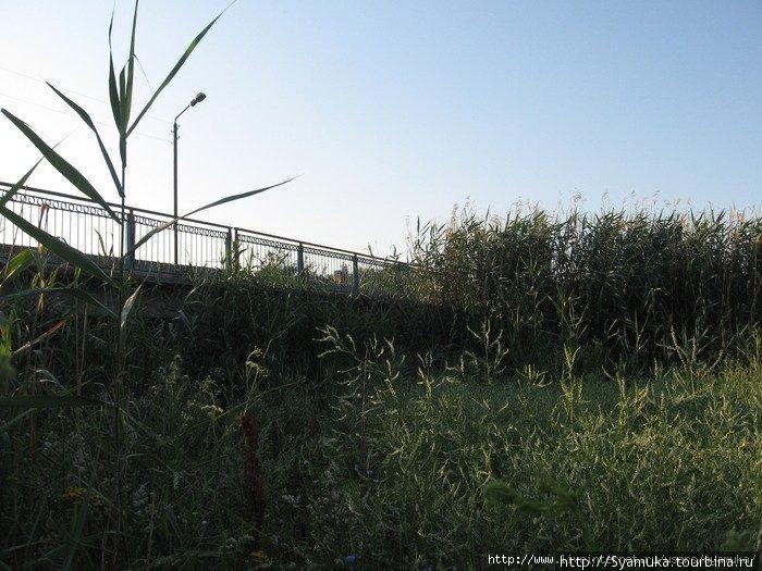 Мост через Мертвовод.