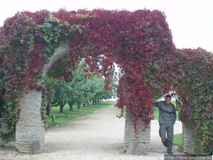 каменные арки увиты девичьим виноградом