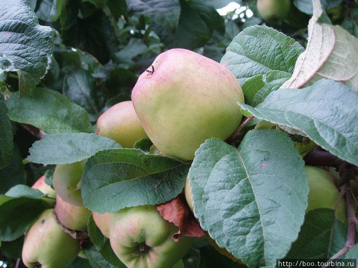 ... переходят во фруктовый сад