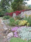 осень: алеет девичий виноград, желтые эхинацеи доцветают, а осенние колхикумы только набирают свою фиолетовую силу.