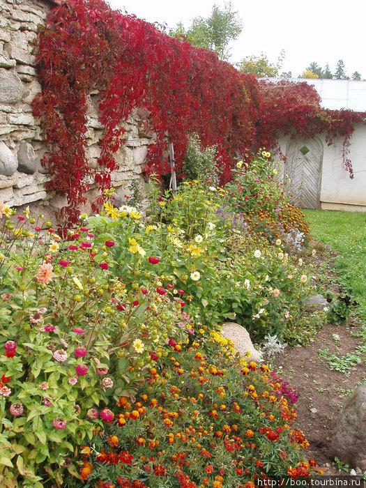 цветники ведут к зданию оранжереи