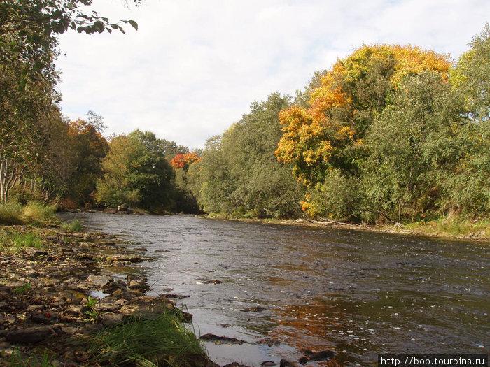 Ягала. Сентябрь раскрасил лес яркими красками.