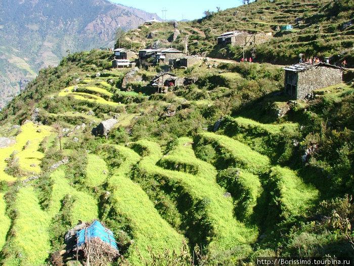 Вот на таких склонах непальцы выращивают свой урожай. Ни один клочок земли не пропадает зря.