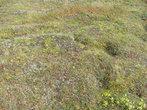 Тундра в начале сентября это поля брусники и морошки