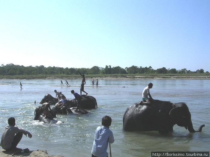 Зато купание слонов — это просто бомба!