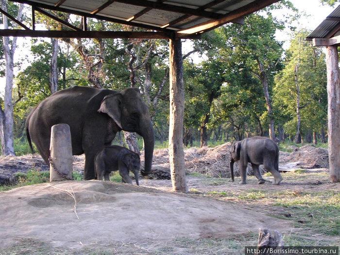 У слонихи недавно родился малыш.