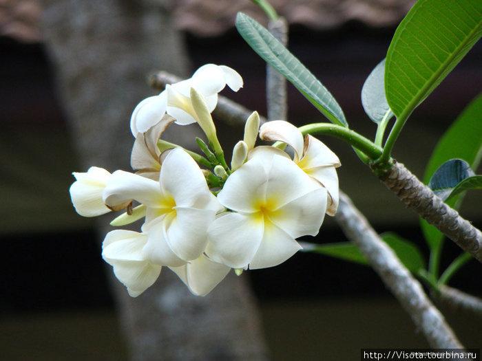 орхидеи растут везде