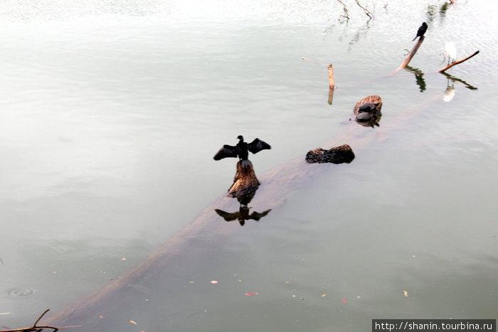 На озере Канди