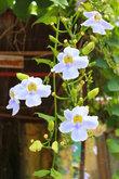 Орхидеи наполняют улицы ароматом