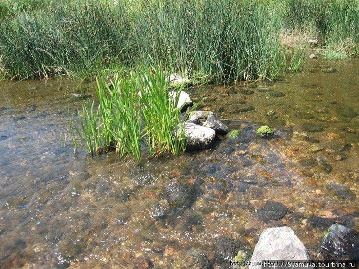 Только я подошла ближе к реке — тут же увидела грациозное серое тело в прозрачной воде с гордо поднятой небольшой головкой. Змея замерла.
