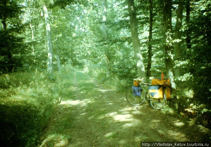 Настоящий датский лес!