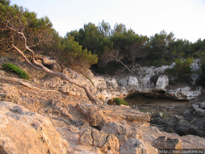 скалистые берега поросли горными породами хвойных