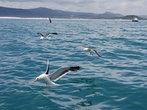 как только начали  кидать  рыбу, прилетели чайки