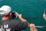 С нами был оператор, он снимал над водой и под нею. Потом вовремя ланча мы смотрели по тв всю запись, очень здорово, особенно зубы и глаза акулы под водой.