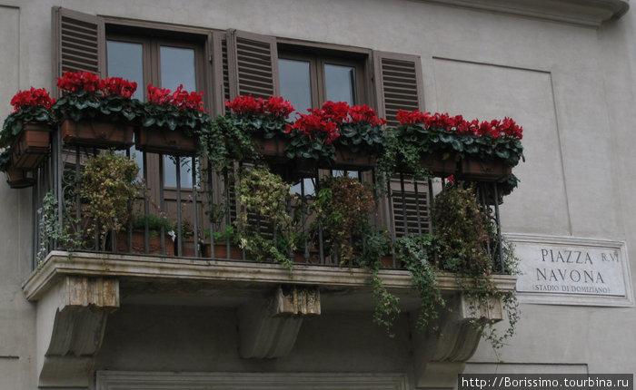 Даже в декабре в Риме кругом — цветы...