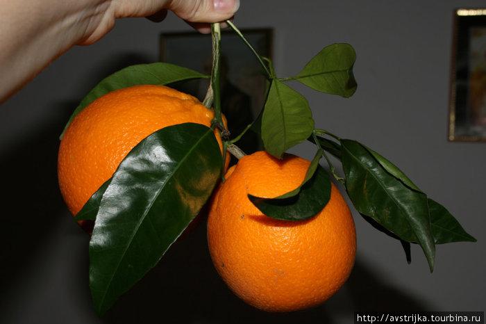 андалузские апельсины