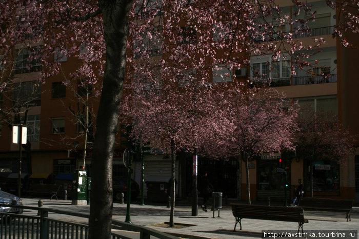 цветущая Андалусия