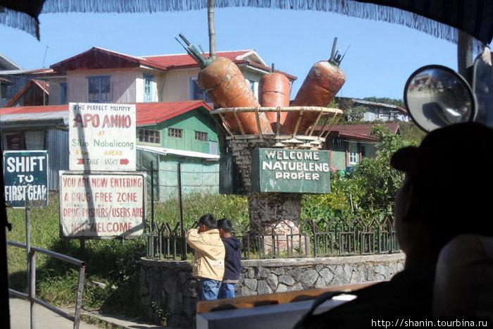 Гигантская морковка — памятник труженикам села