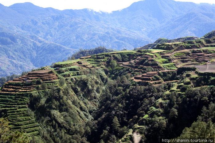 Рисовые террасы по пути Сагада