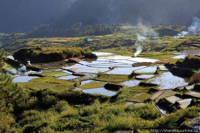 Рисовые поля на окраине Сагада