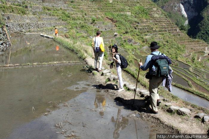 Пешком по рисовым террасам