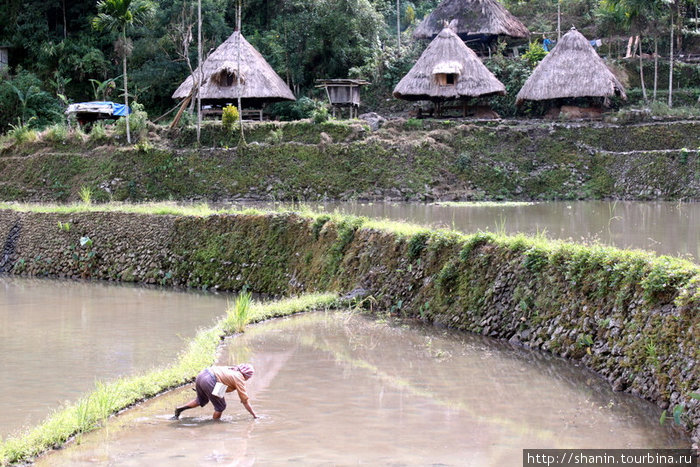 Работа на рисовом поле