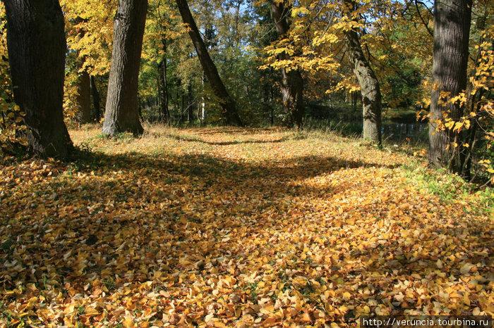 Осень в гатчинском парке.