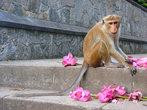 Нарву цветов и подарю букет, той обезьянке, которую люблю