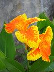 Ораньжевый цвет- любимый у буддистов
