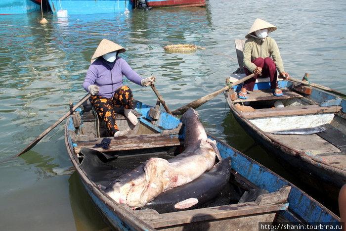 Свежую рыбу привезли на берег, включая и гигантскую акулу