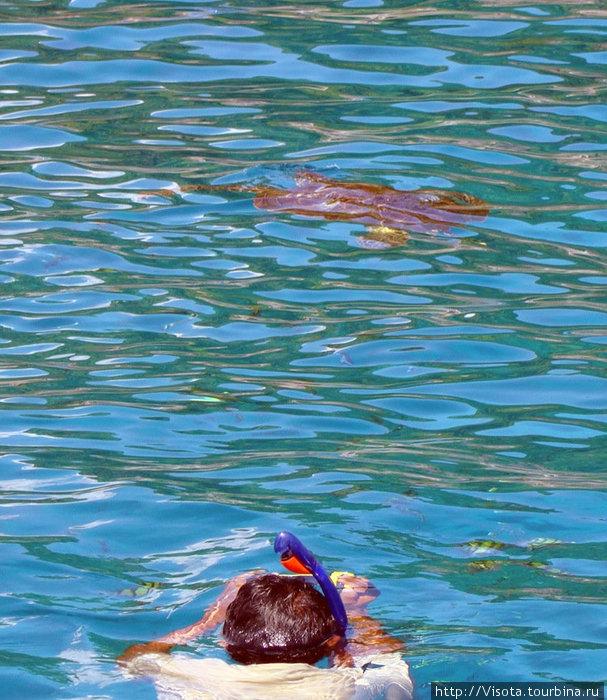 черепахи приплыли