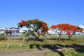 выйдя из здания аэропорта я сразу увидел- всё вокруг зелено и цветёт яркими красками