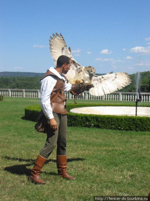 В охоте участвуют не только соколы, но и совы Розенбург-Мольд, Австрия