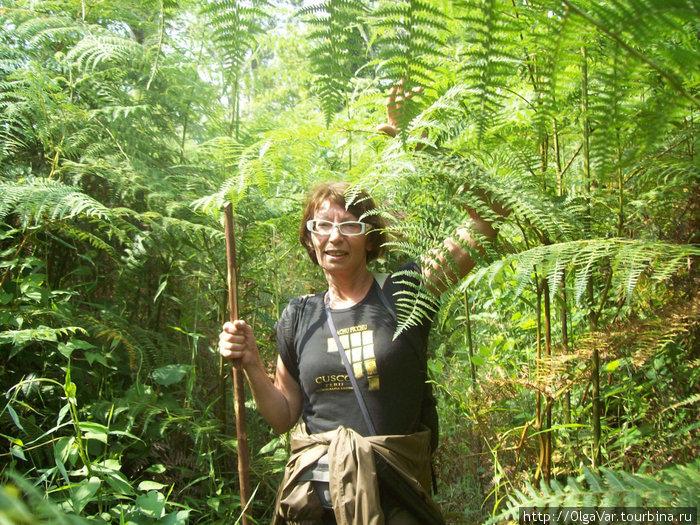 Пешком по джунглям