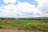 зелёные поля