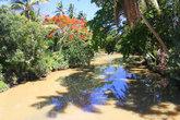 отражение в реке-пальмы и цветы