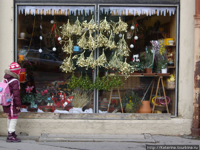 Витрина цветочного магазина перед Рождеством.