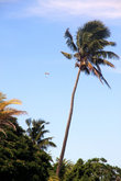 Парашютист над пальмами
