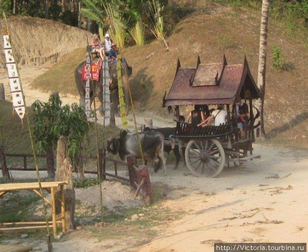 Быки движутся по главной дороге, так что слон должен притормозить.