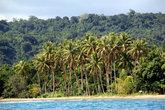 Пальмовая роща на берегу — прямо напротив острова Хайдуэй