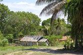 Почти наша деревня, только вокруг пальмы, кокосы, экзотические фрукты и почему то всё время тепло...