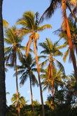 Высокие пальмы осветило солнцем