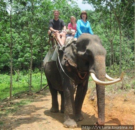 Если настигнет кризис, то у меня есть еще одна профессия — погонщик слона!