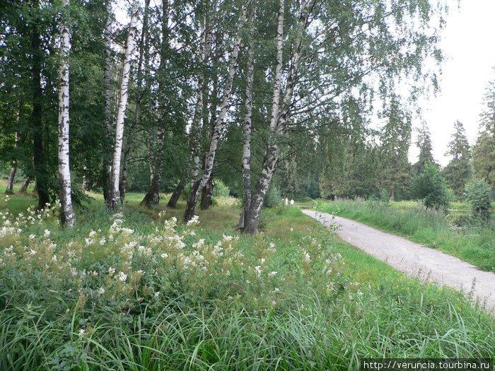 Лето в Шуваловском парке.