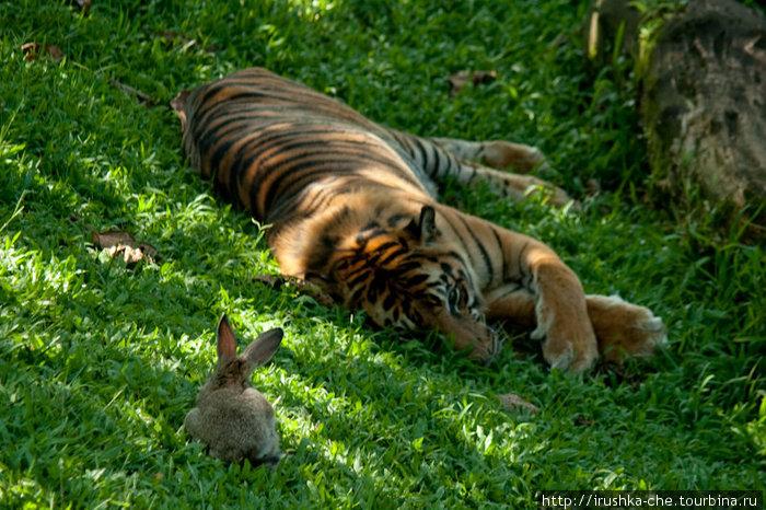 Могут ли тигры дружить с кроликами?